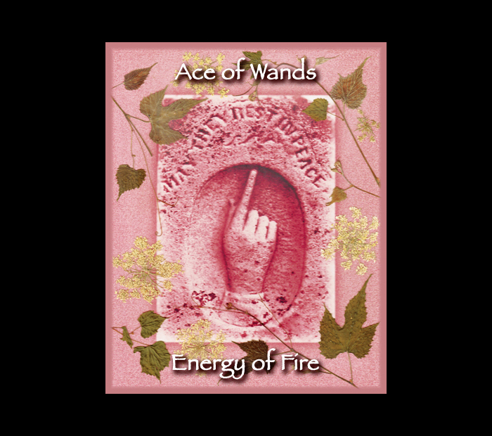 Minor Arcana: Wands 01 Ace / Pressed with Vine & Queen Anne's Lace (Witch Hazel Press ©)